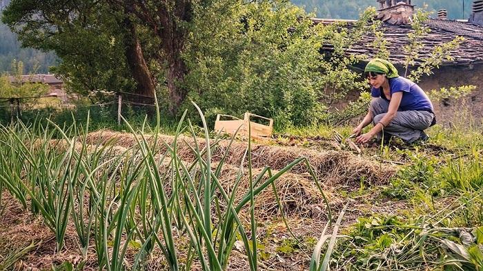 Imparare a coltivare ed autoprodurre sono la base di una vita in montagna