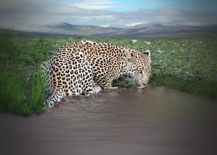 animali in via di estinzione