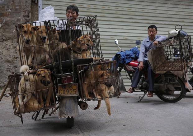 Cina.Festival della Carne di Cane