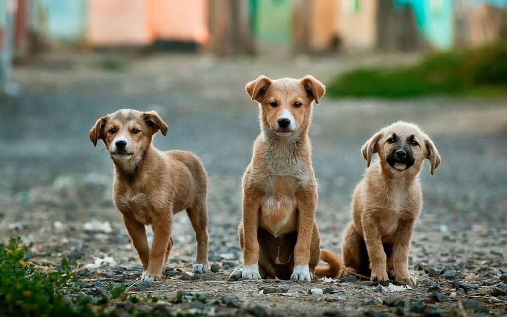 Carne di cane. Una strage