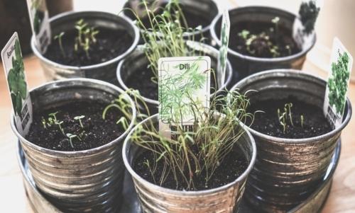 Orto sul balcone: piantare le erbe aromatiche è semplice e ideale per iniziare anche per i meno esperti.
