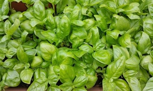 Pesto al basilico: è la versione classica di questa pietanza tipica della tradizione ligure.
