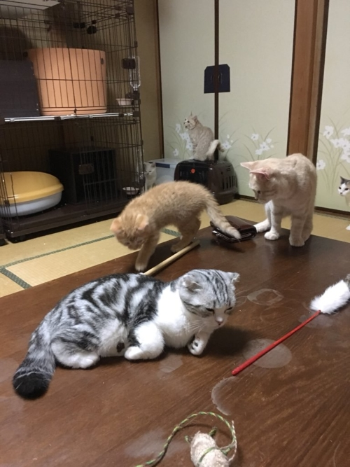 Hotel con gatti (fonte: twitter.com/mituyasann)