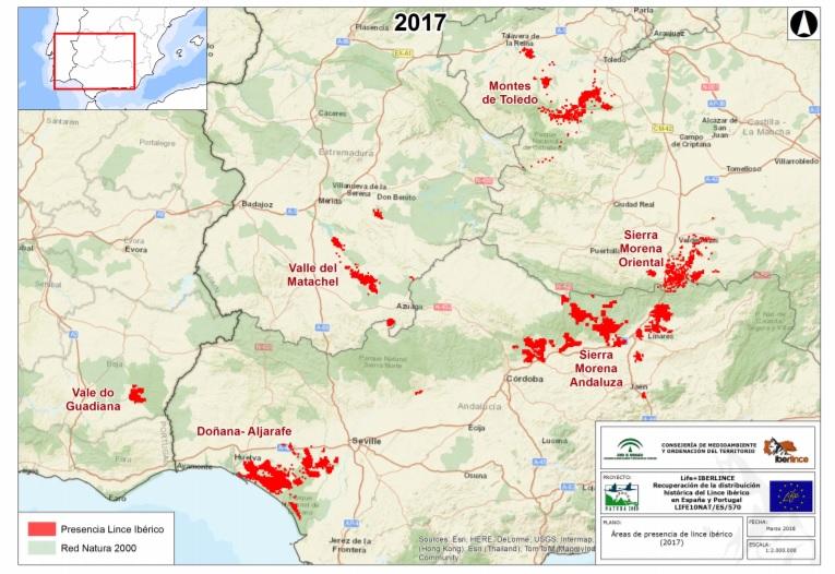 La distribuzione della lince iberica sulla base del censimento 2017
