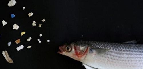 microplastiche-nel-cibo