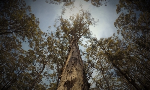 Tree camping: dormire sugli alberi è per molti un sogno infantile finalmente realizzabile.