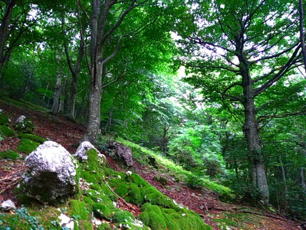 Tree Tents Trekking. Turismo naturalistico