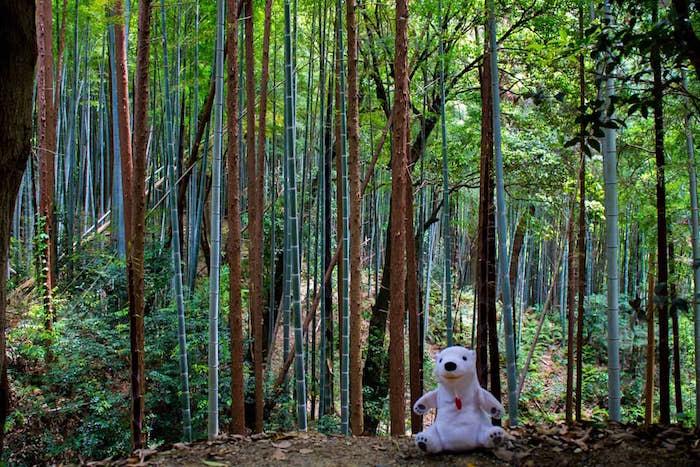 Polo-Polar-Kyoto-1.jpg