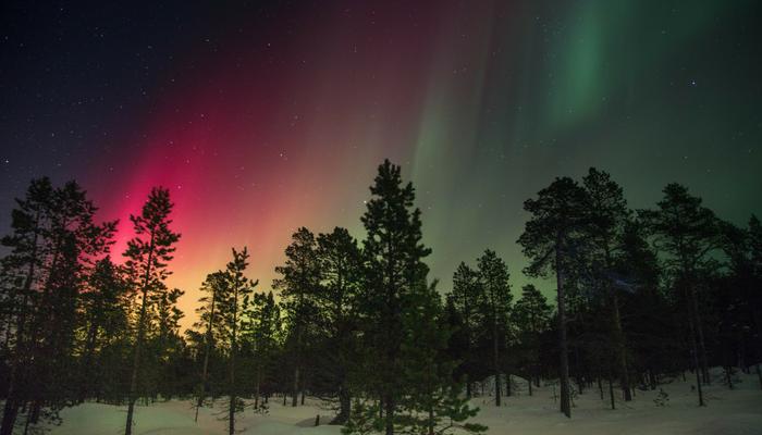 aurora boreale pini