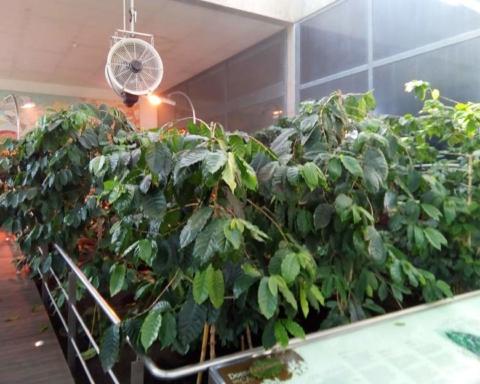 centro ciencia do café (2)