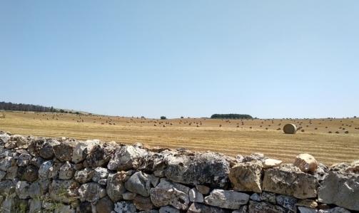 Cammino materano: attraversando la Via Peuceta si giunge allaltopiano delle Murge caratterizzato dai tipici muretti a secco.