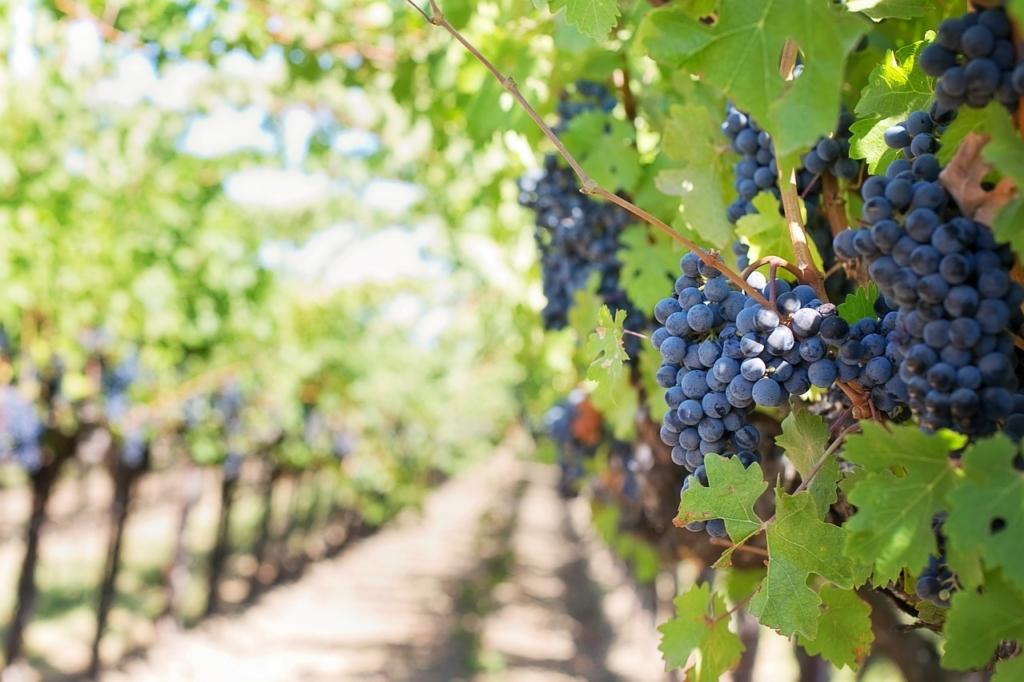 Coltivare la vite e produrre vino per gli ospiti