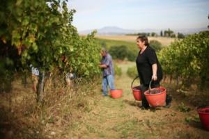 Agricoltura biologica. Vita da vignaroli