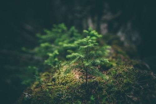 Alberi che crescono nella foresta