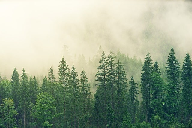 foresta (1)