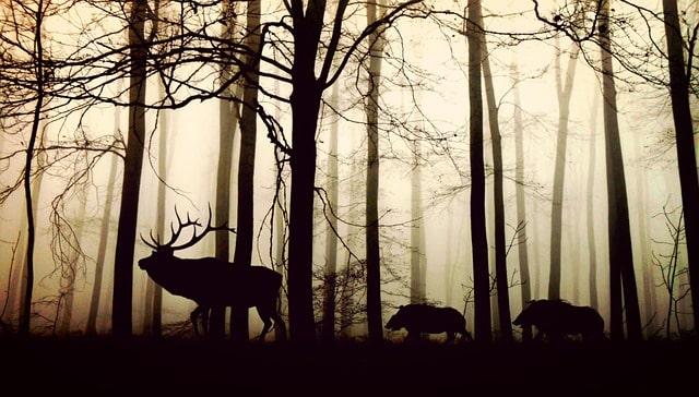 foresta (3)