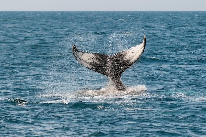Balena Santuario dei Cetacei