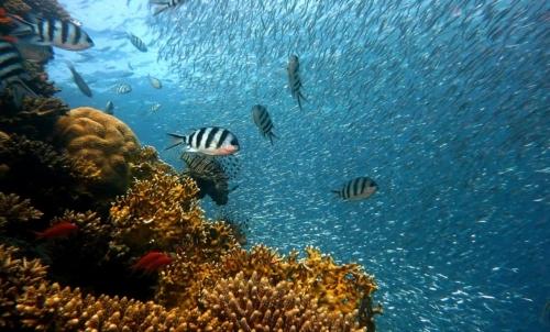 Una delle conseguenze dellamento della temperatura oltre 1,5°C sarebbe la scomparsa di buona parte della barriera corallina.