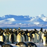 -Antartide-