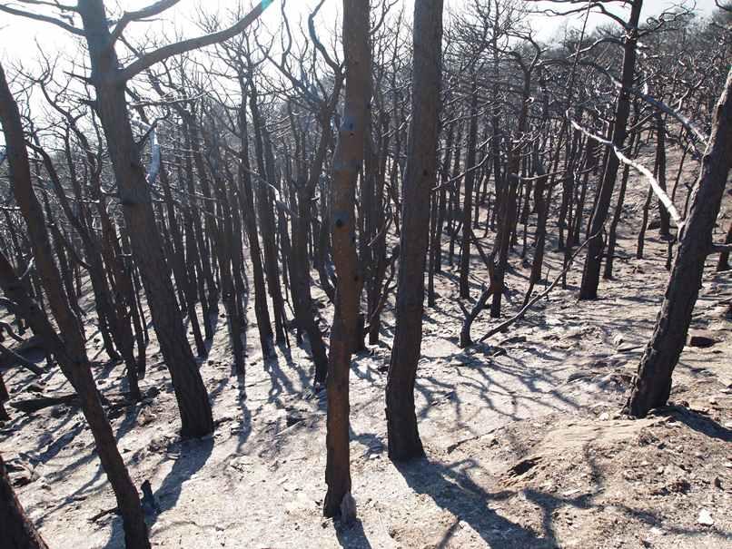 Il bosco di Mompantero dopo l'incendio dell'ottobre 2017
