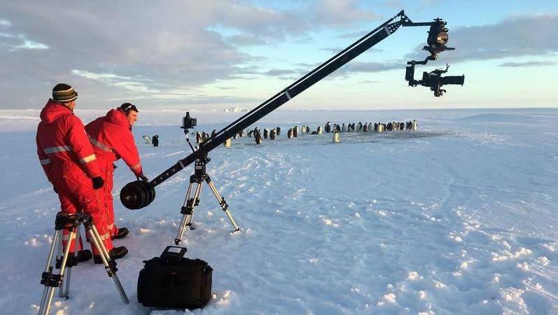 bbc riprese pinguini