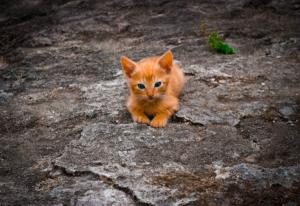 Il gatto in montagna