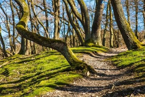 foresta (2)