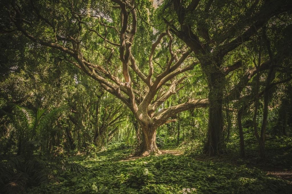 foresta (6)