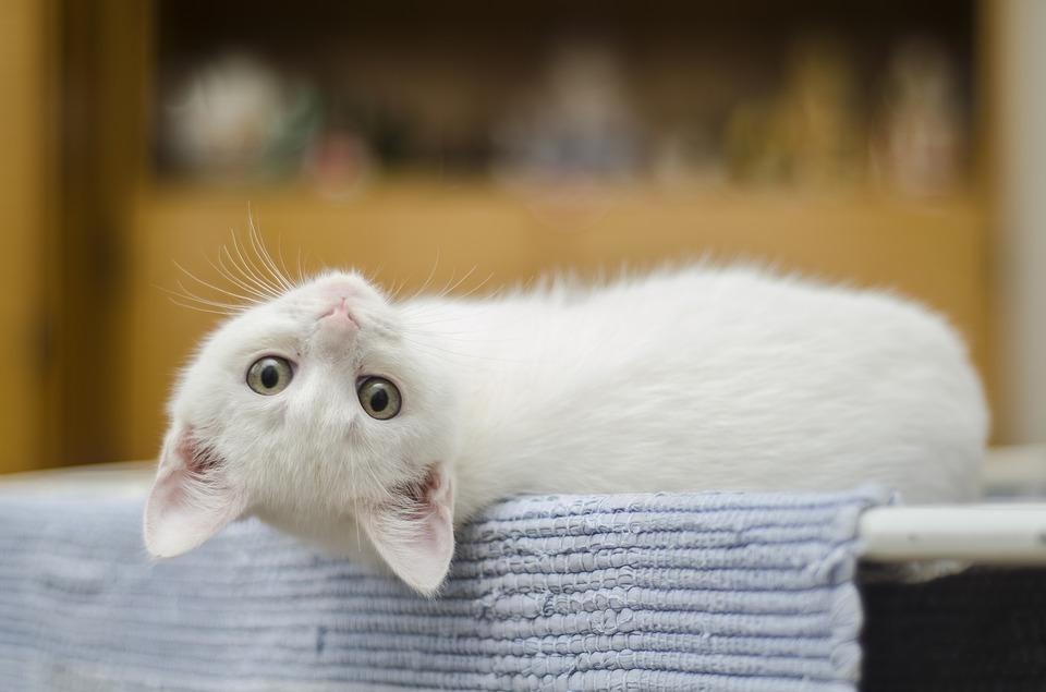 gatti antidepressivi