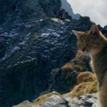 Il gatto sul Monte Rysy. Photo Jabczynski