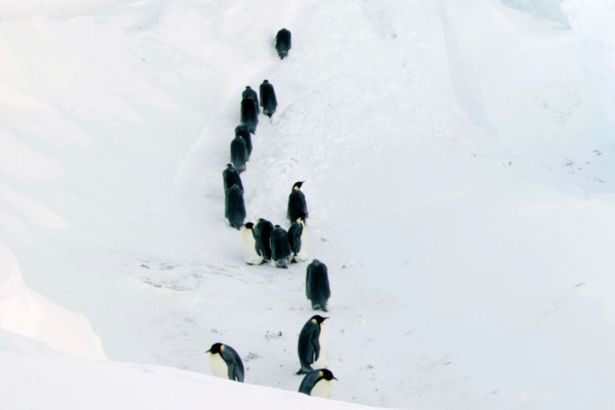 pinguini BBC rampa