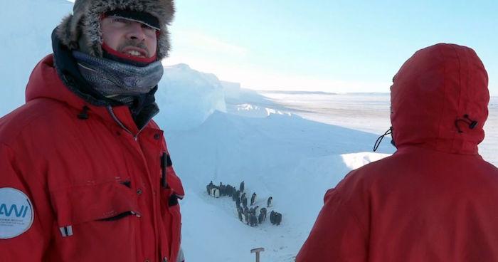 pinguini BBC troupe