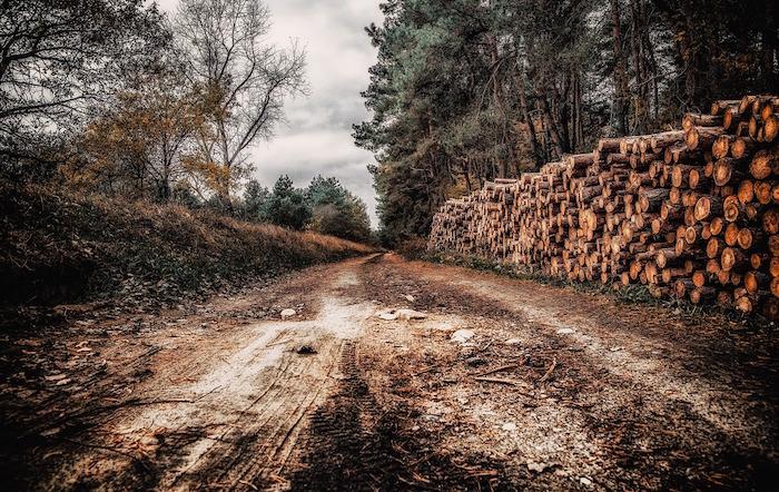 alberi abbattuti alberi di natale