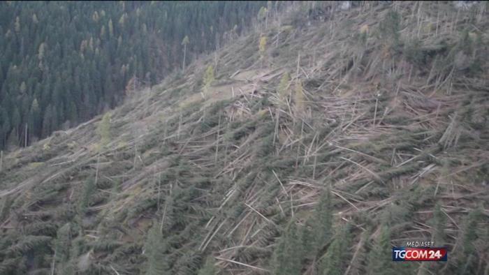 alberi di natale alberi devastati