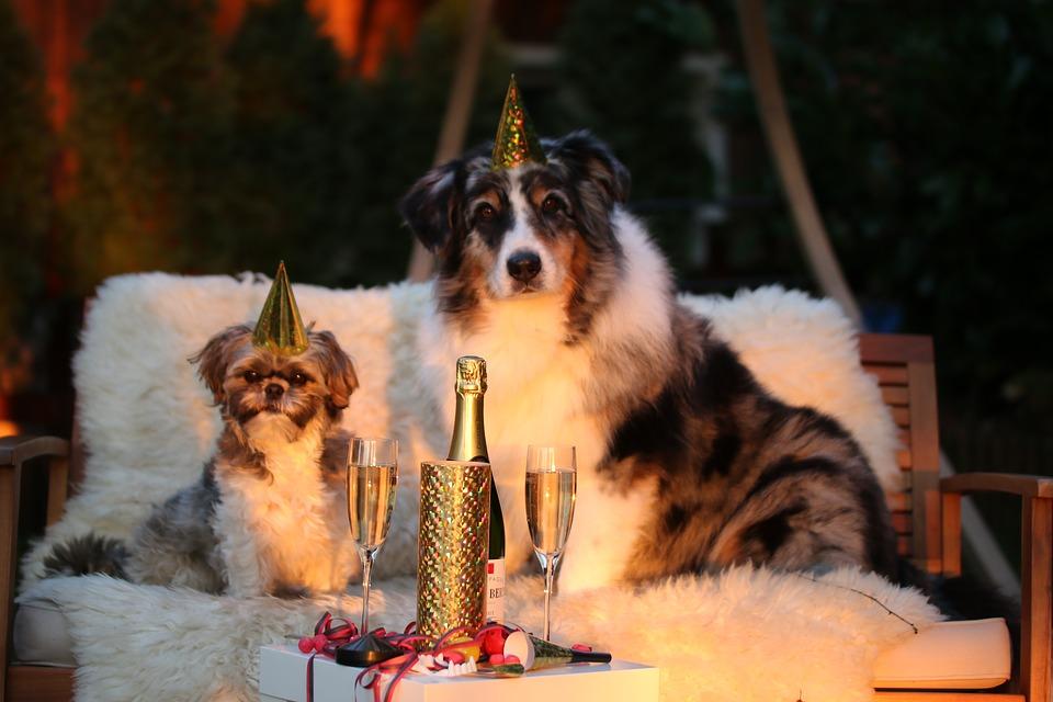 Cani e Capodanno