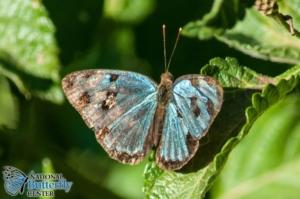 Texas. National Butterfly Center