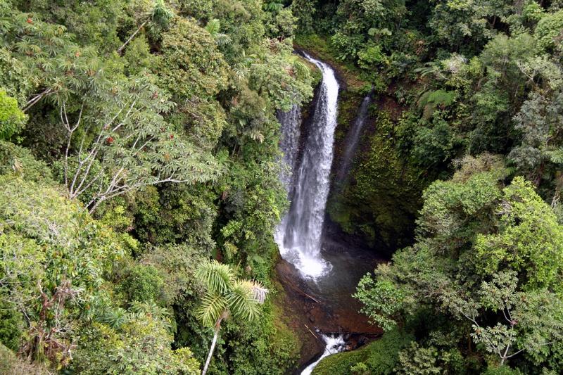Foresta Ecuador