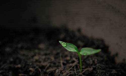La lotta contro linquinamento del suolo è nellagenda 2030 dellONU per lo sviluppo sostenibile.