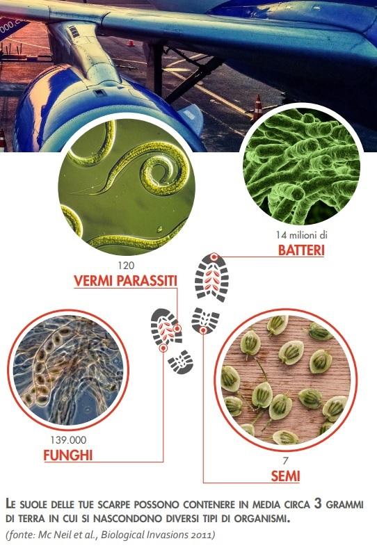 infografica specie aliene invasive