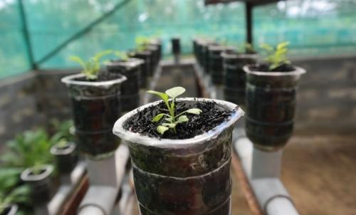 Mini serra idroponica: uno dei regali veg-friendly ideale per coltivare in casa piante aromatiche.