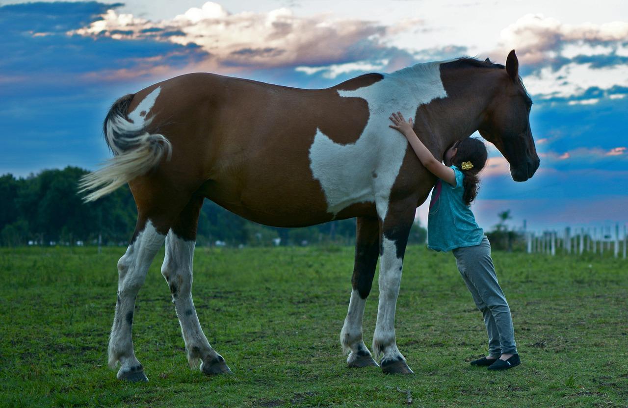 Una famiglia per sempre: il cavallo tra gli animali d'affezione