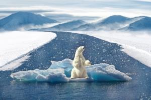 L'orso polare rischia l'estinzione, il territorio si riduce.