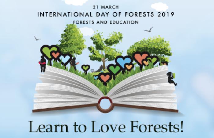 giornata internazionale delle foreste learn to love forests