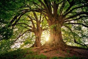 giornata delle foreste albero