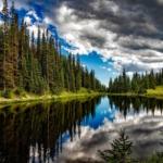giornata internazionale delle foreste foresta colorado