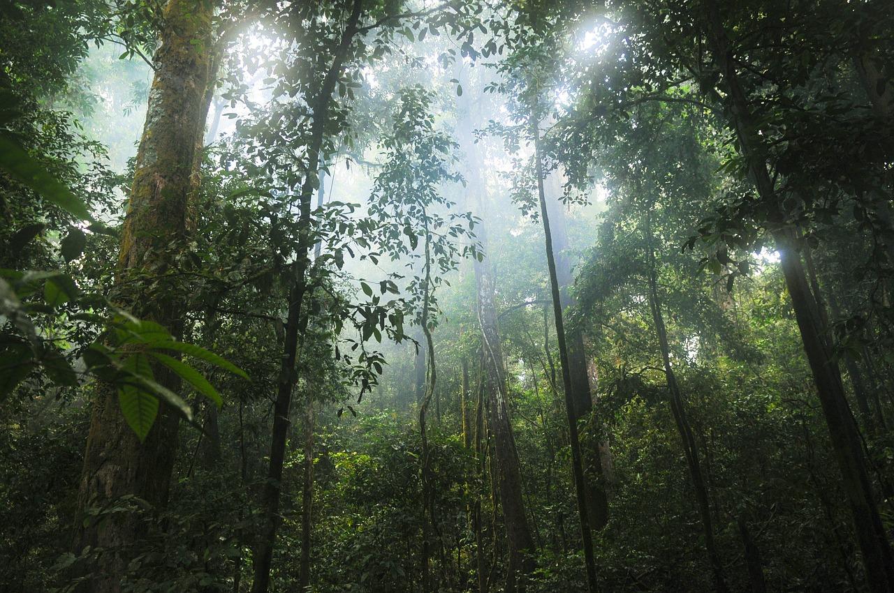 Biodiversità: flora e fauna selvatica da preservare