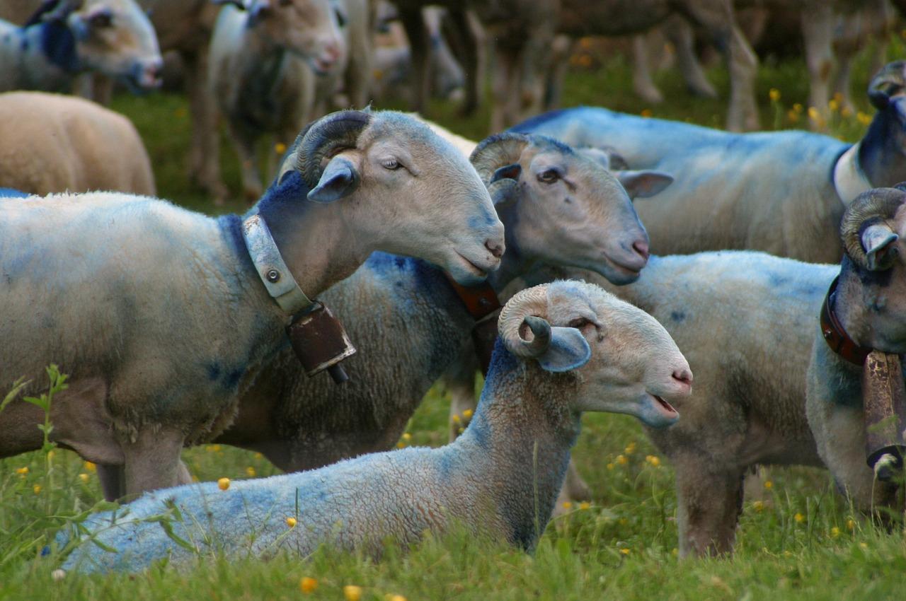 Territorio montano. La pastorizia rivalutata come risorsa economica