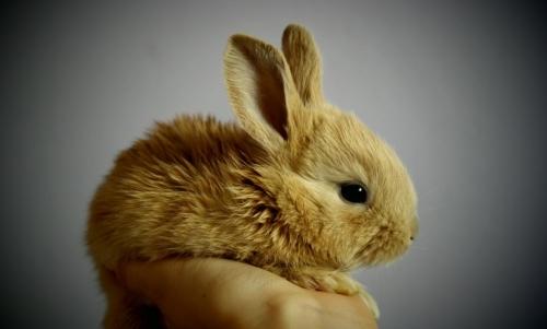 Gli animali rimasti orfani possono beneficiare degli effetti positivi generati dallo spazzolamento.