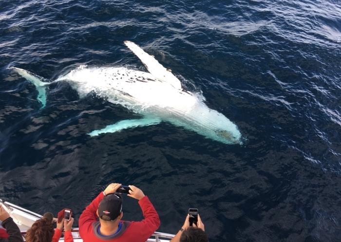 avvistatore di cetacei