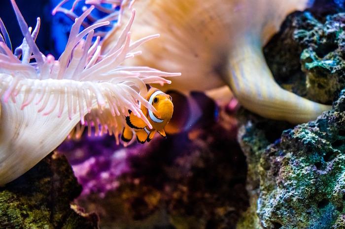 barriera corallina biodiversità